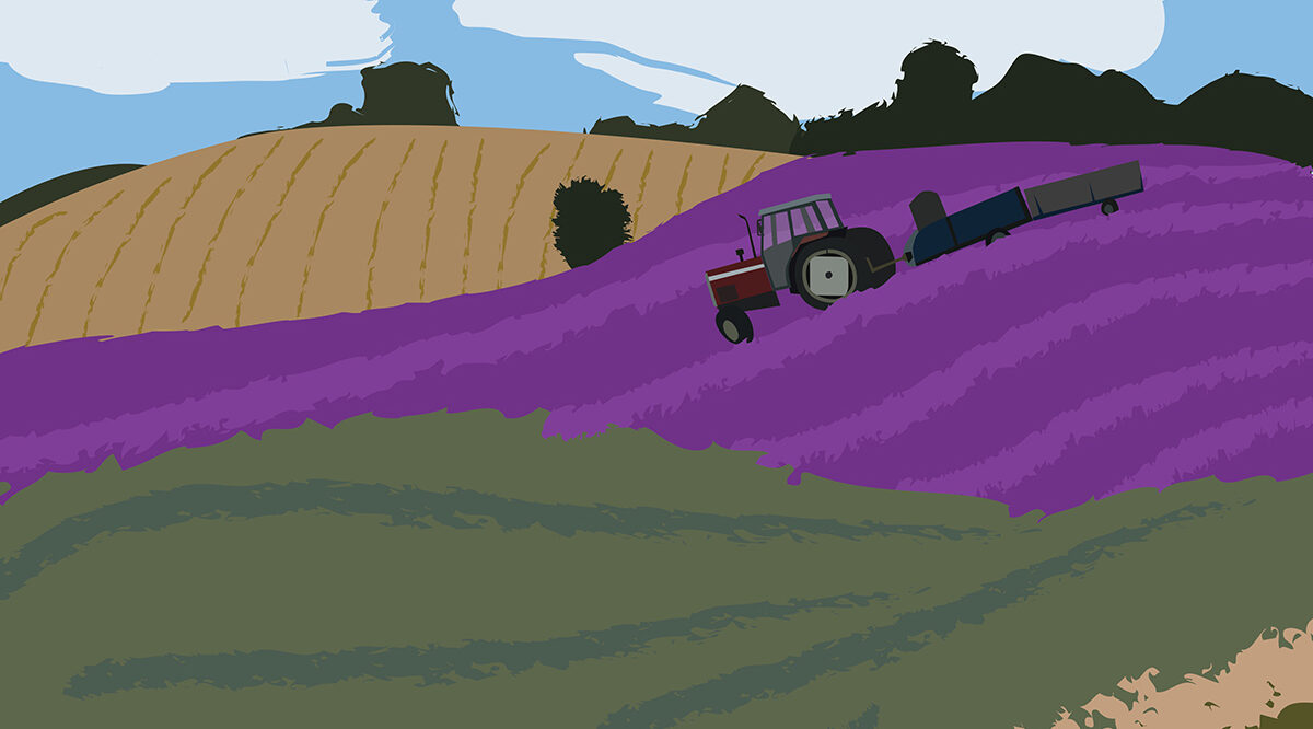 Digital drawing of Hitchin Lavender
